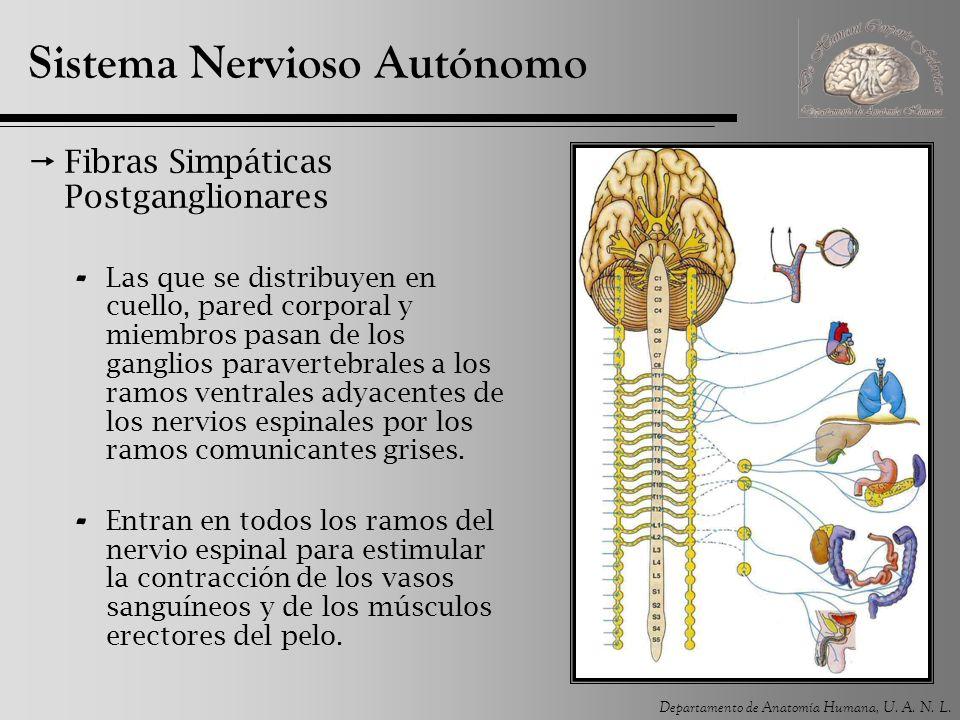Introducción al Sistema Nervioso - ppt descargar