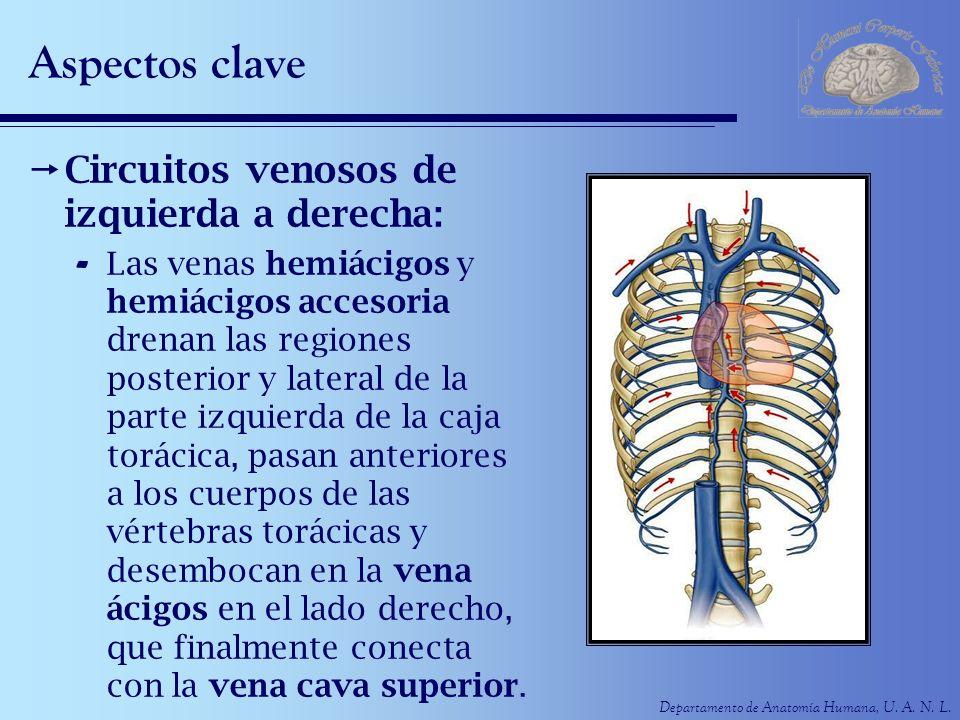 Moderno Anatomía De La Vena ácigos Ornamento - Imágenes de Anatomía ...