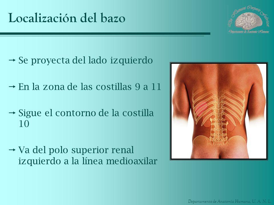 Results for Localización Del Bazo En El Cuerpo Humano