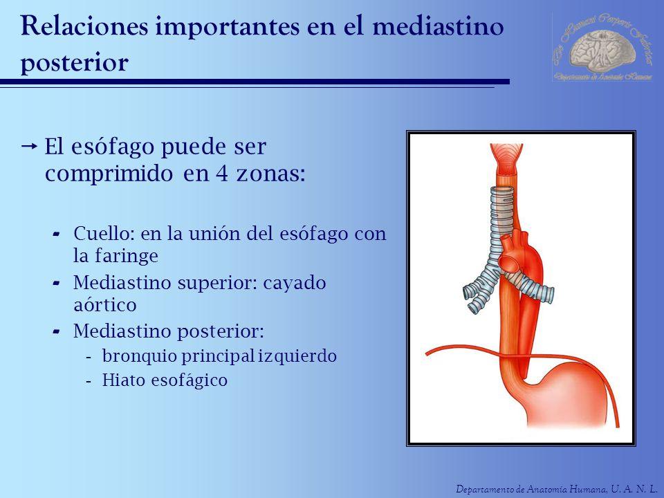 Dorable Anatomía Mediastino Posterior Inspiración - Anatomía de Las ...