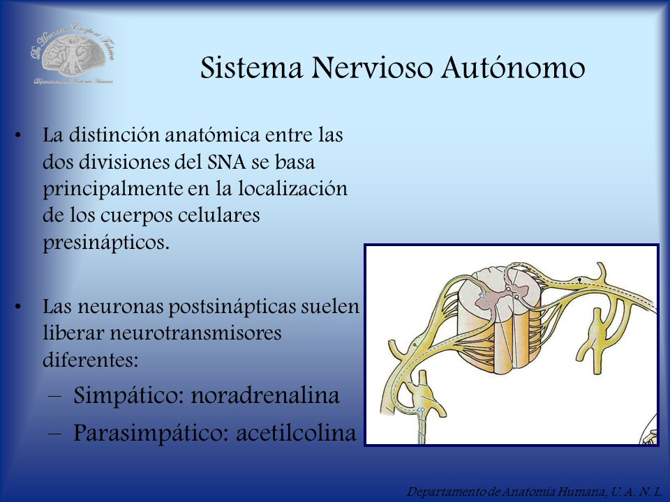 Módulo X Introducción al Sistema Nervioso - ppt descargar