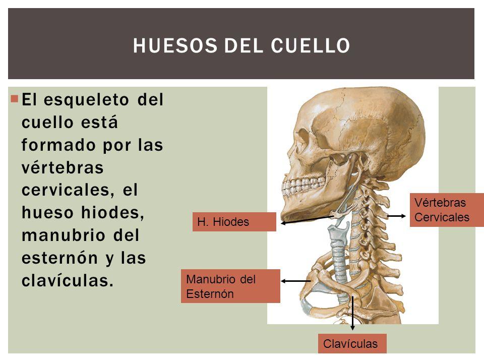Cara y Cuello. - ppt video online descargar