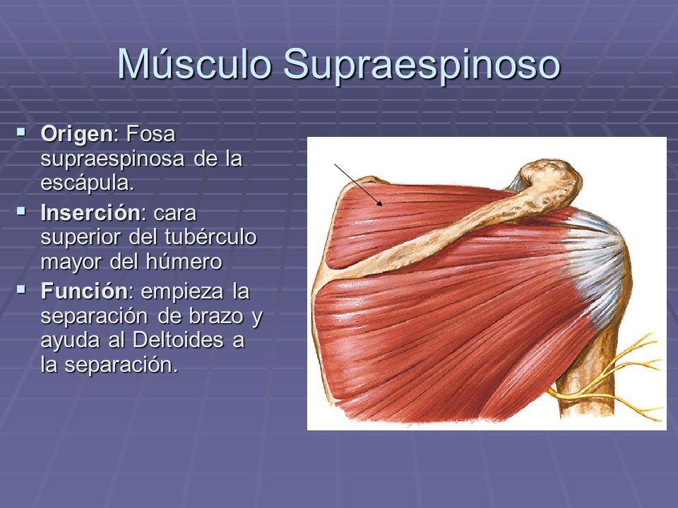 Dra. Marianela Jiménez Brenes UCIMED - ppt video online descargar