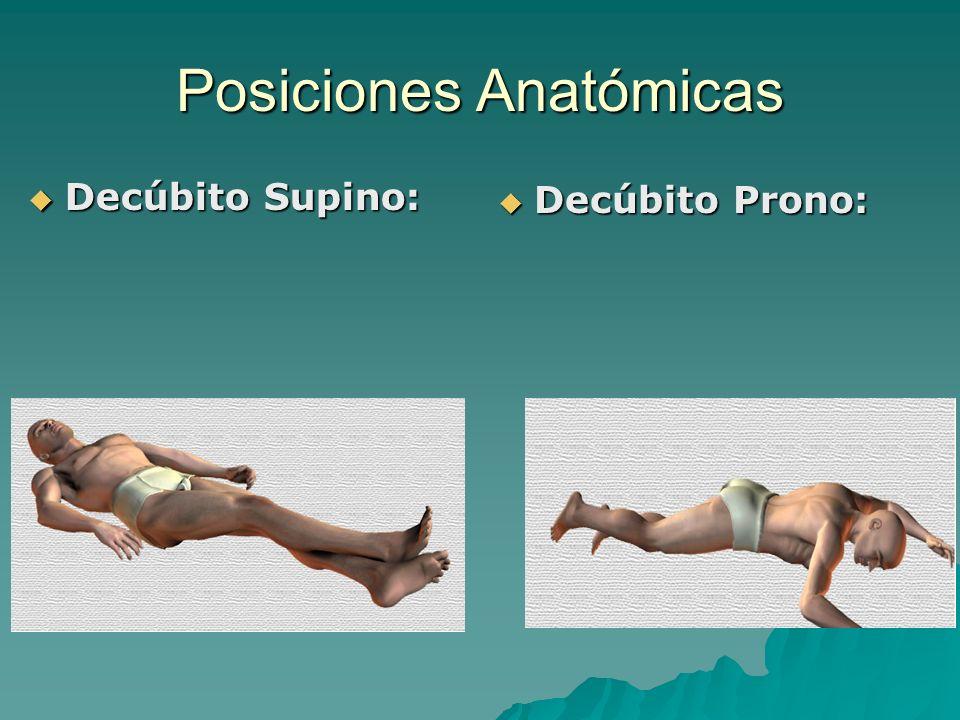 Generalidades de Anatomía - ppt video online descargar