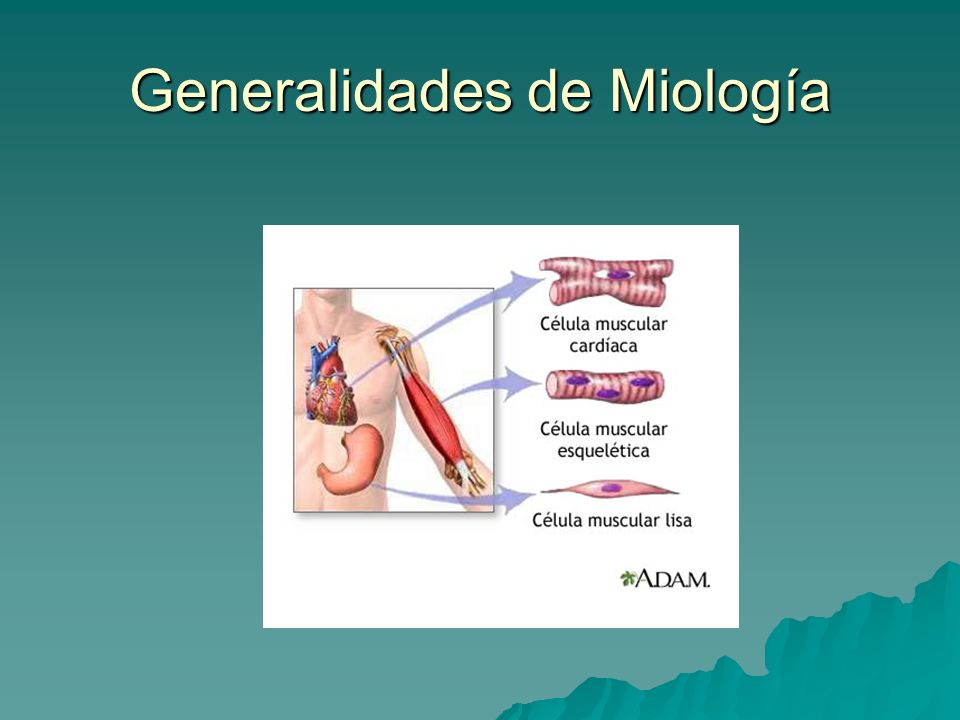 MIOLOGIA GENERALIDADES PDF DOWNLOAD