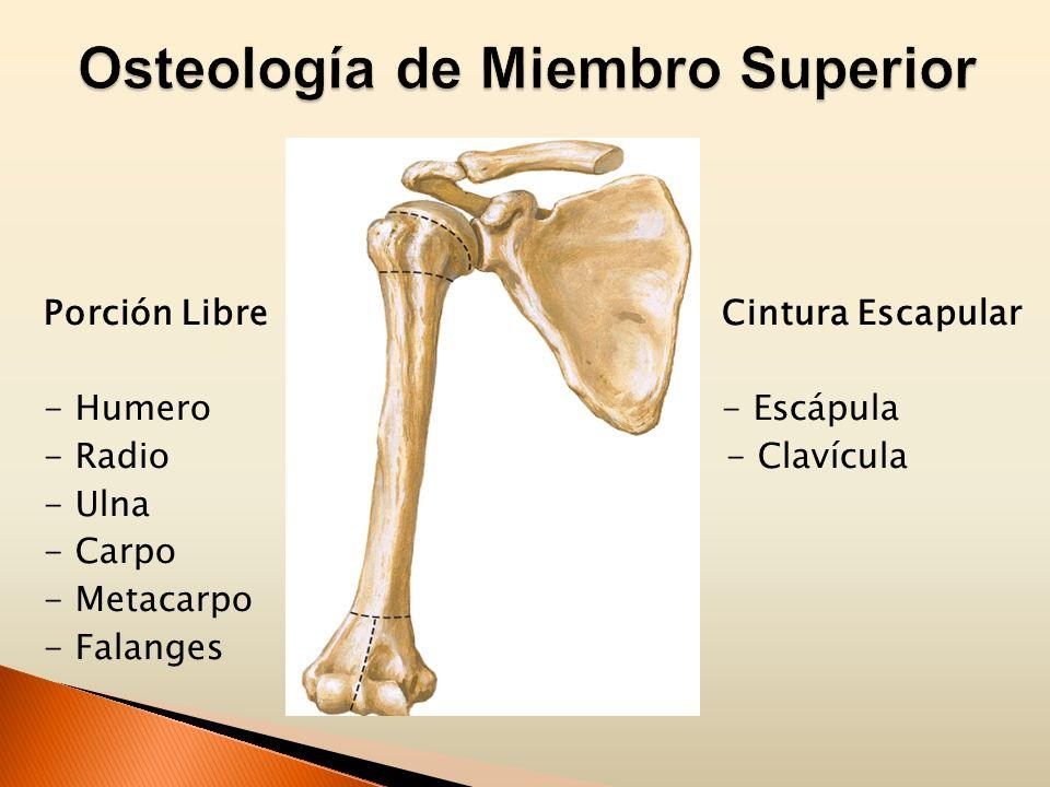 Miembro Superior I Marianela Castro. - ppt video online descargar