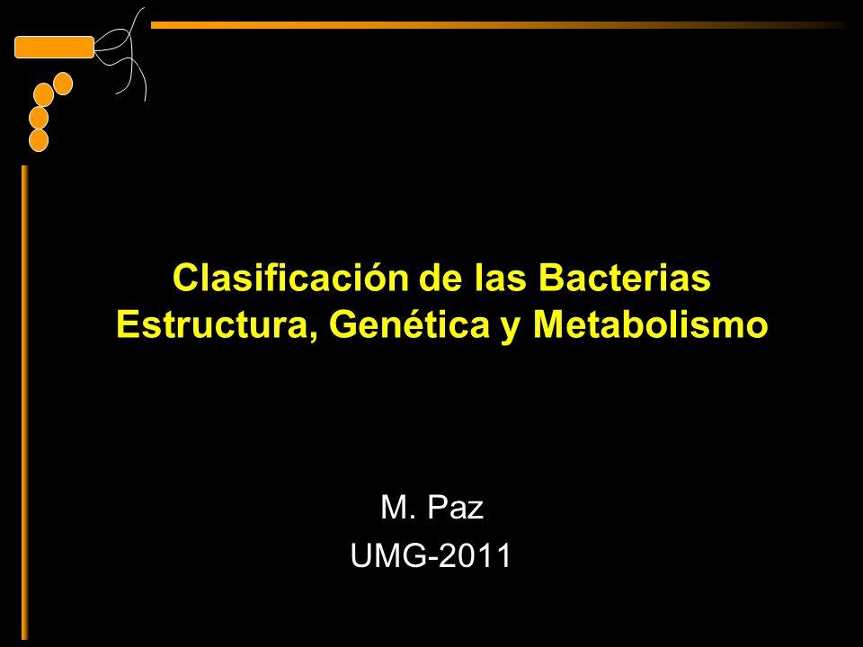 Clasificación De Las Bacterias Estructura Genética Y