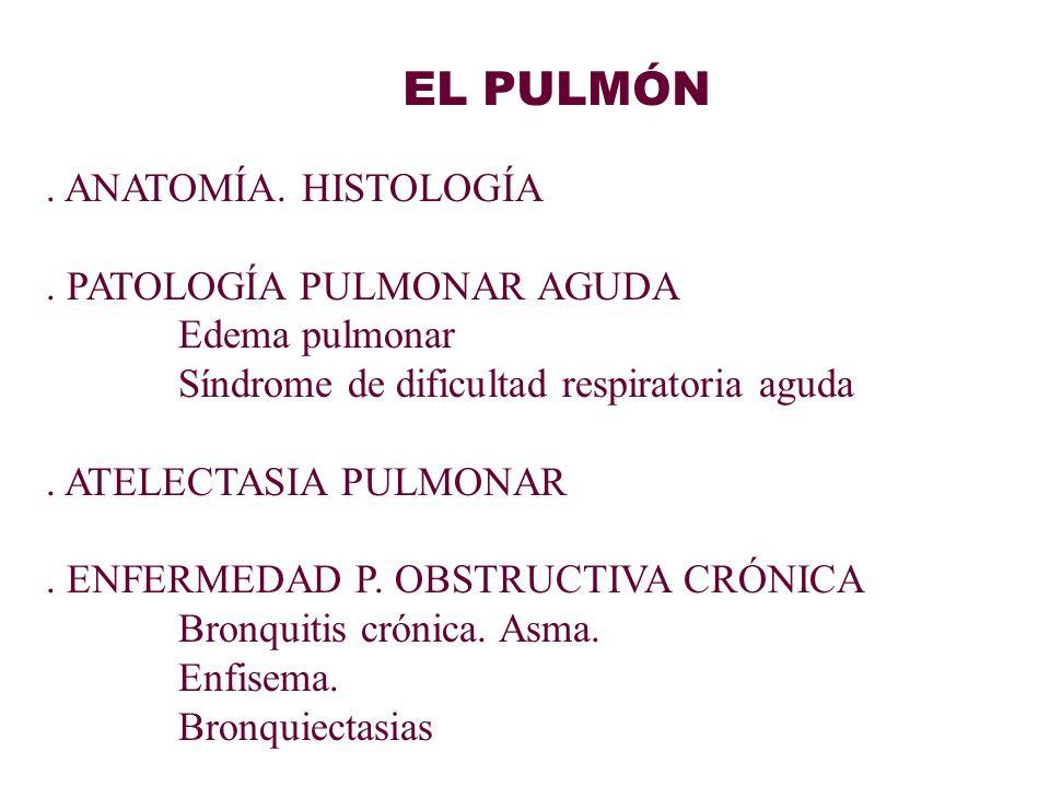 Patologia cap 15 pulmon.