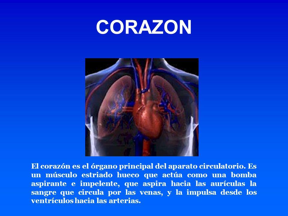 ANATOMIA Y FISIOLOGIA CARDIACA - ppt video online descargar