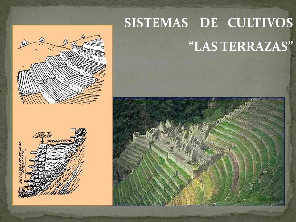 Grandes Civilizaciones Americanas Ppt Video Online Descargar