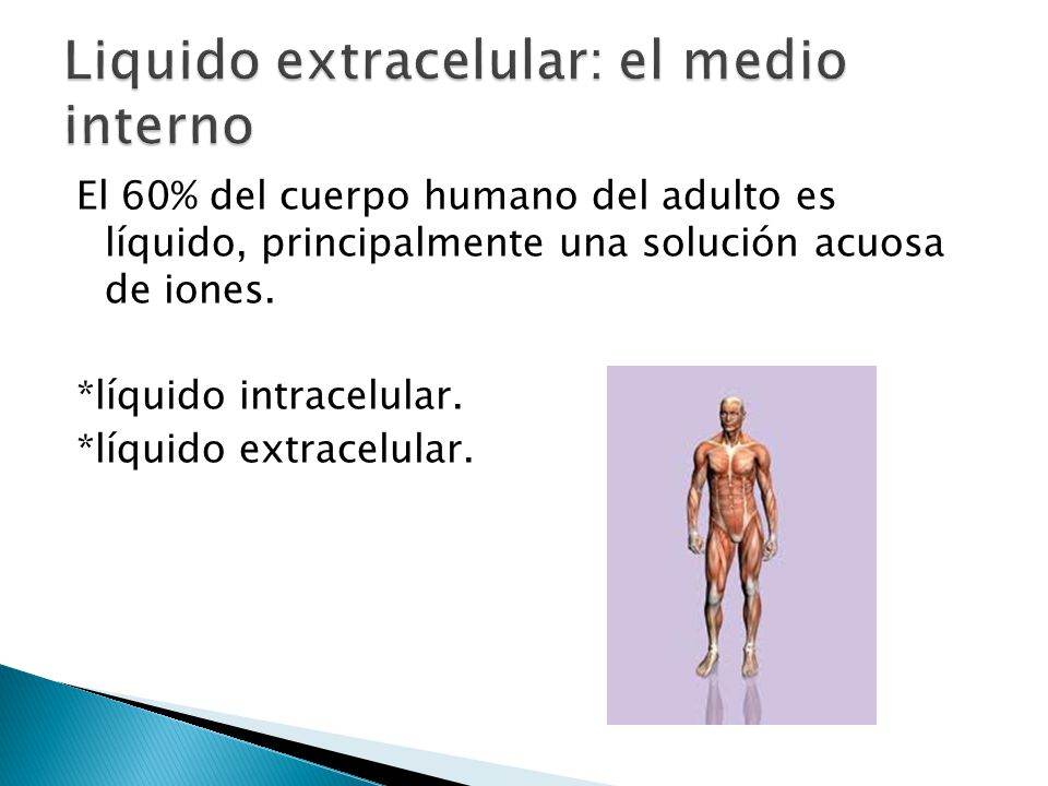 Liquido extracelular: El medio interno y Homeostasis - ppt descargar