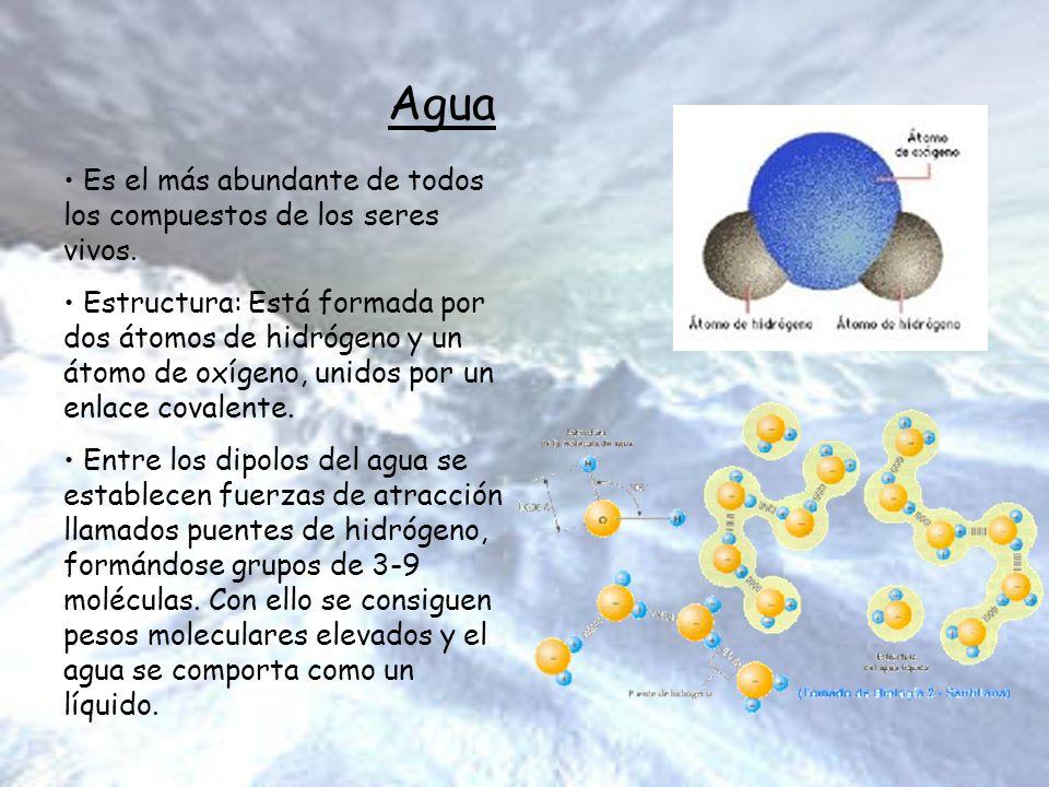 Estructura Molecular Y Macromolecular De La Organización