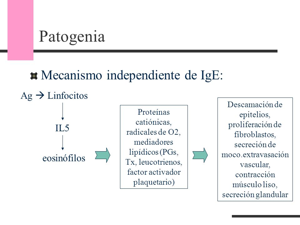 Patogenia Mecanismo independiente de IgE: Ag  Linfocitos IL5