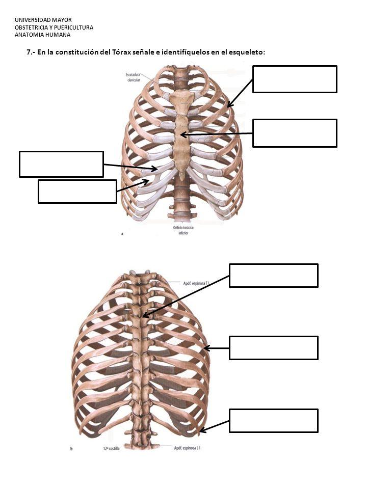 Paso Práctico N°1: Planos Anatómicos y Osteología General - ppt ...