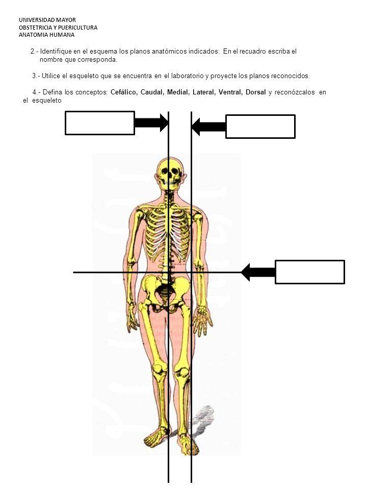 Famoso Laboratorio De Anatomía Huesos Prácticos Embellecimiento ...