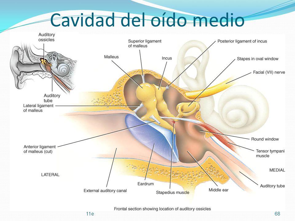 Capítulo 17 LOS SENTIDOS ESPECIALES Esquema conferencia Sandoval ...