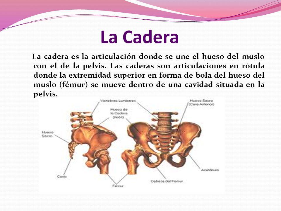 FRACTURAS DE CADERA. - ppt video online descargar