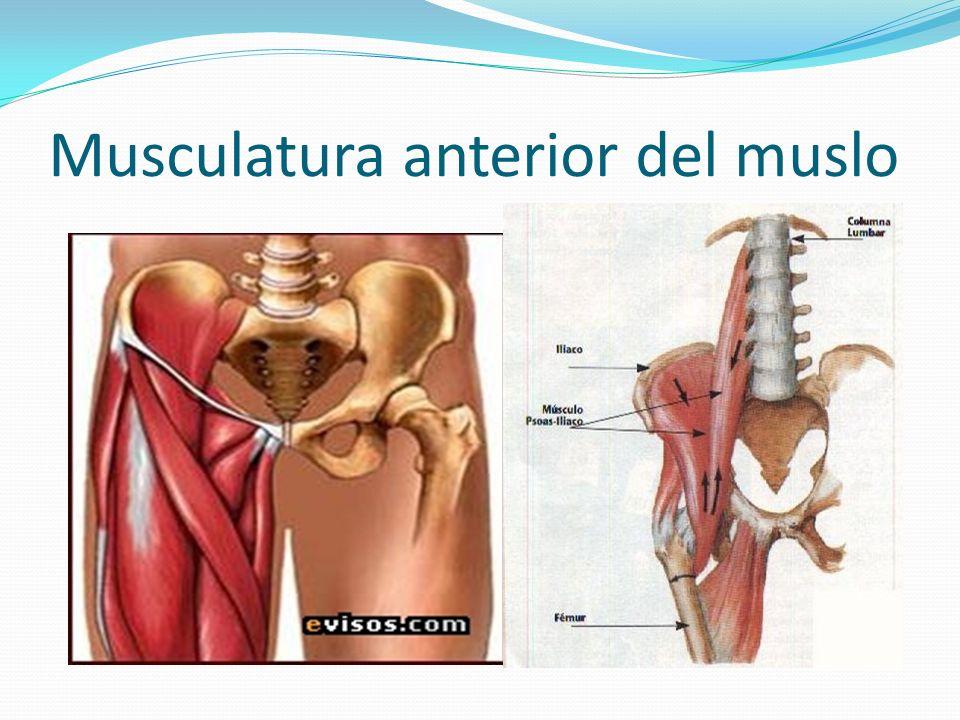 LESIONES MUSCULARES DE LA CINTURA PELVICA - ppt video online descargar