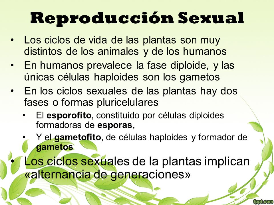 Modo de reproduccion sexual de las plantas