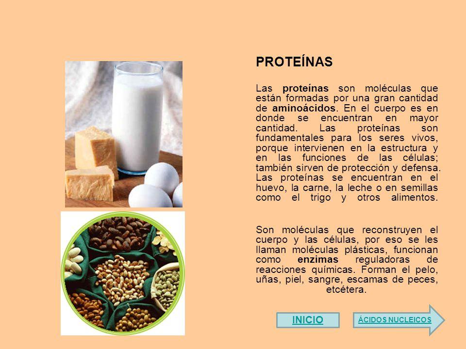 Donde se encuentran las proteinas del huevo