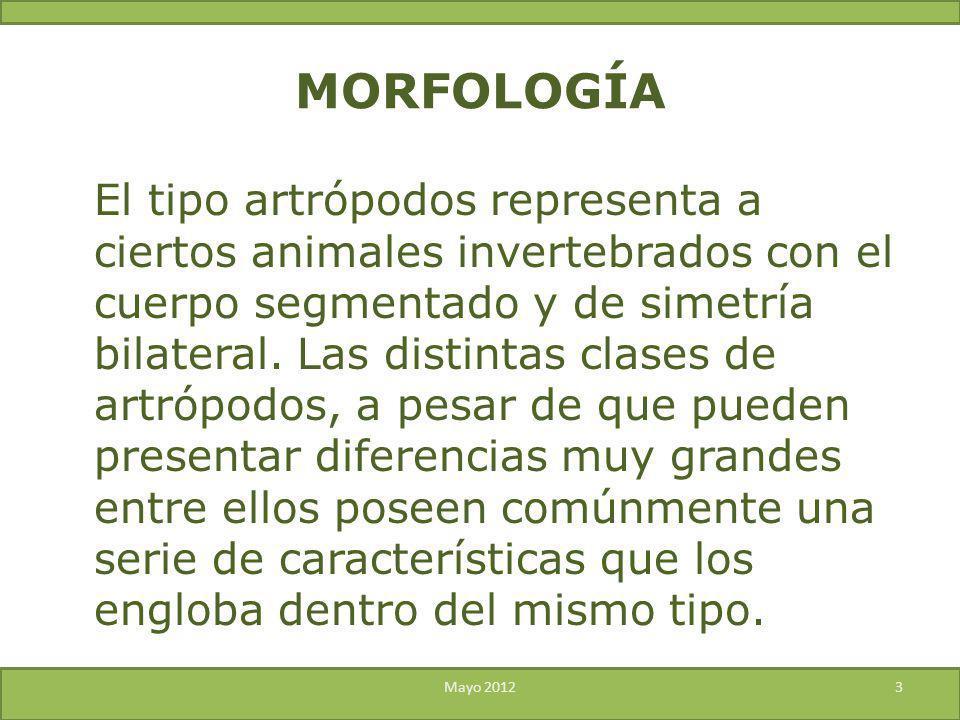 Morfología Insectos Uts Ing Alejandro Ribas Meza Ppt