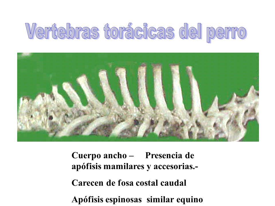 en las distintas especies - ppt video online descargar