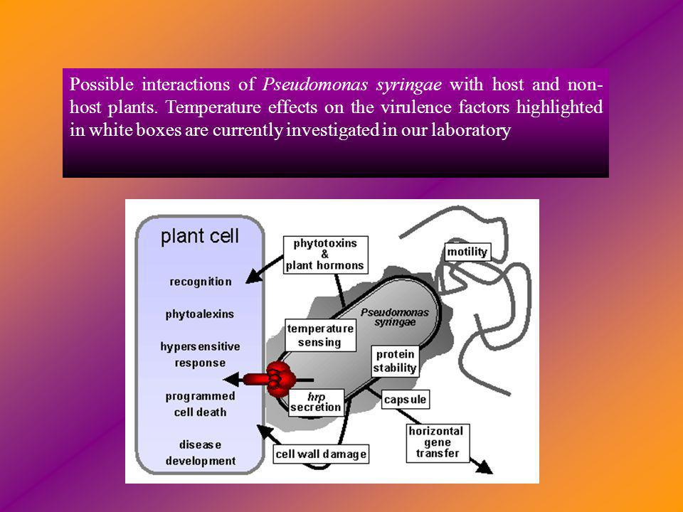 Possible interactions of Pseudomonas syringae with host and non-host plants.