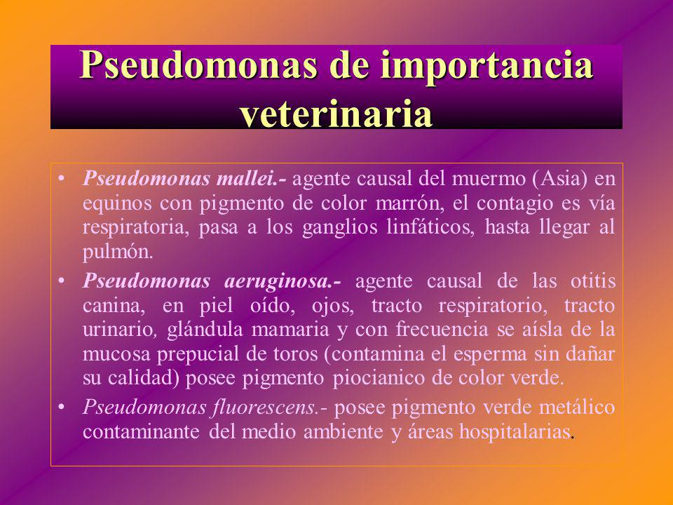 Pseudomonas de importancia veterinaria
