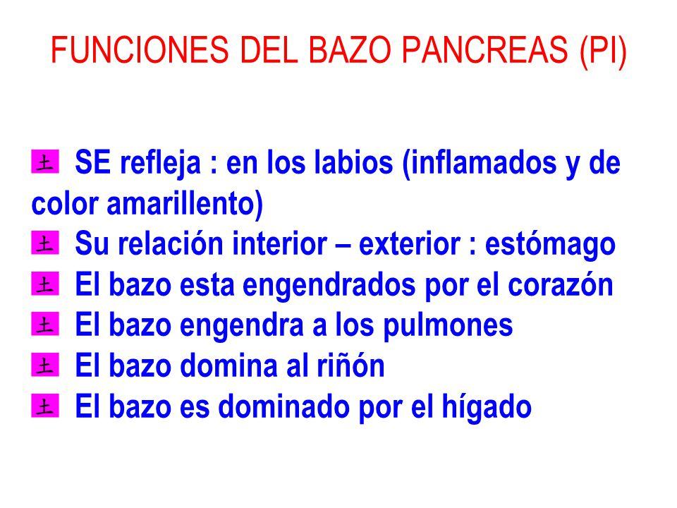 5TA SESIÓN EL MOVIMIENTO DE LA TIERRA EL CANAL DEL BAZO PANCREAS ...