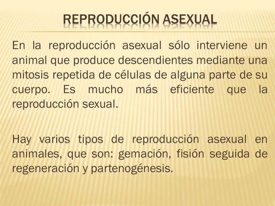 Tipos de reproduccion asexual fragmentation reproduction