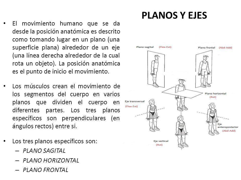 PLANOS Y EJES DEL MOVIMIENTO HUMANO - ppt video online descargar