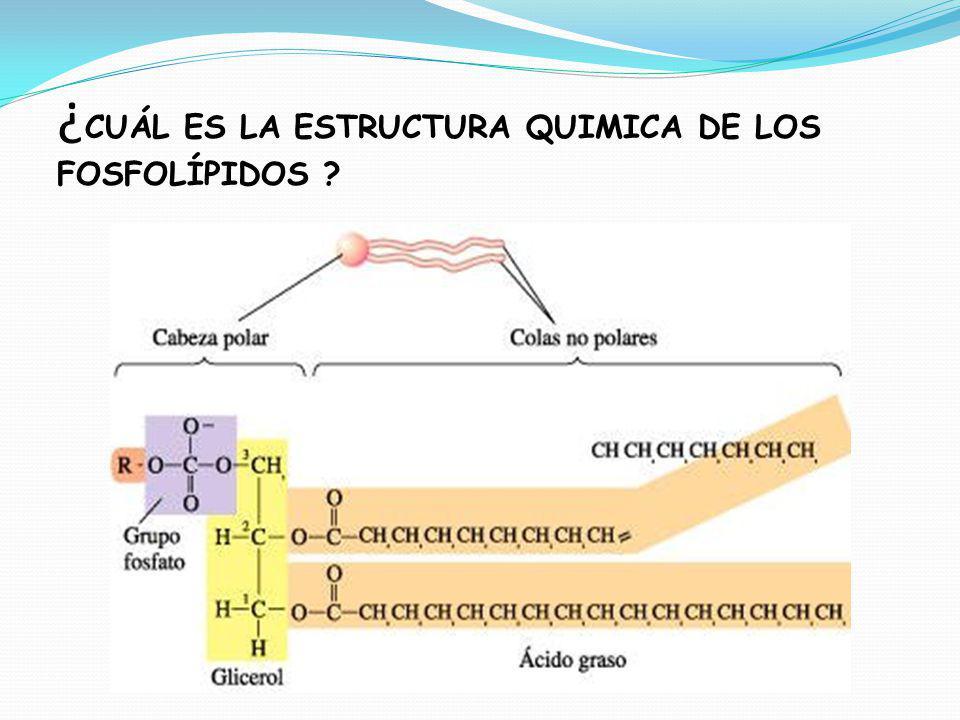 Lípidos Compuestos Orgánicos Formados Por Cho Ppt Descargar