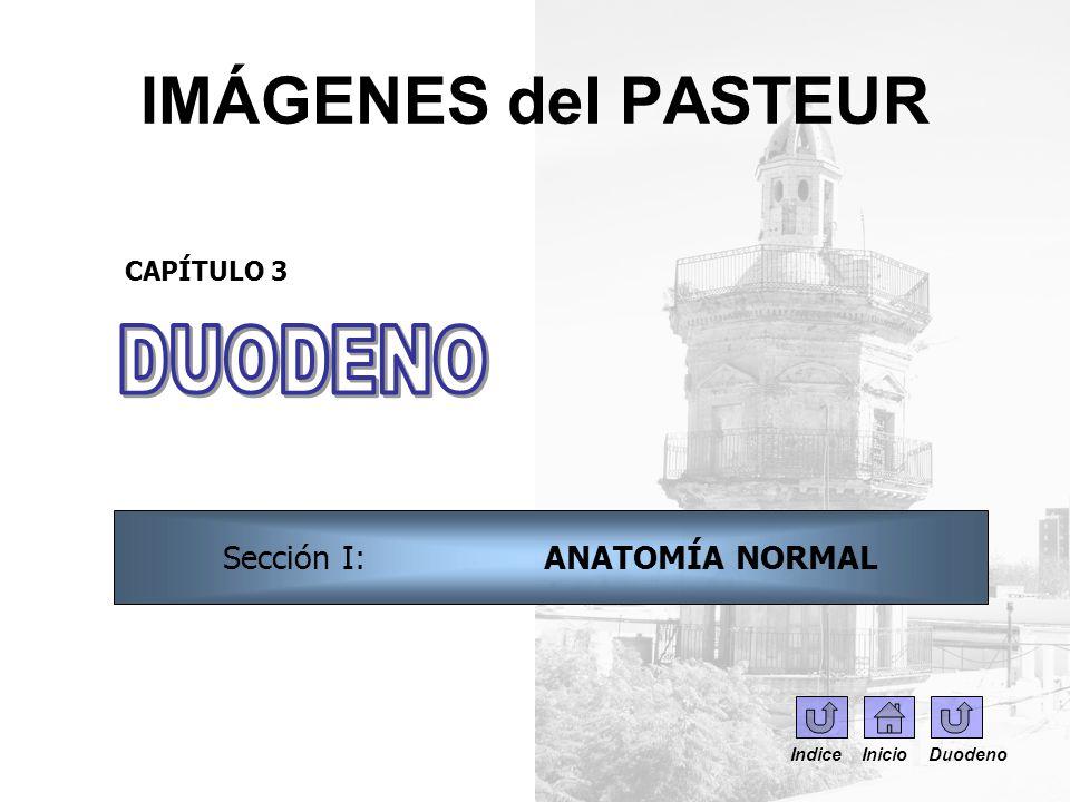 IMÁGENES del PASTEUR DUODENO CAPÍTULO 1 – SECCIÓN 3 NORMAL ...