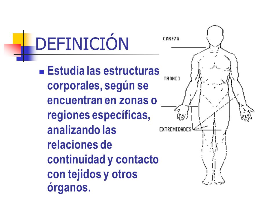 Lujoso Anatomía Bilateral Definición Bandera - Imágenes de Anatomía ...