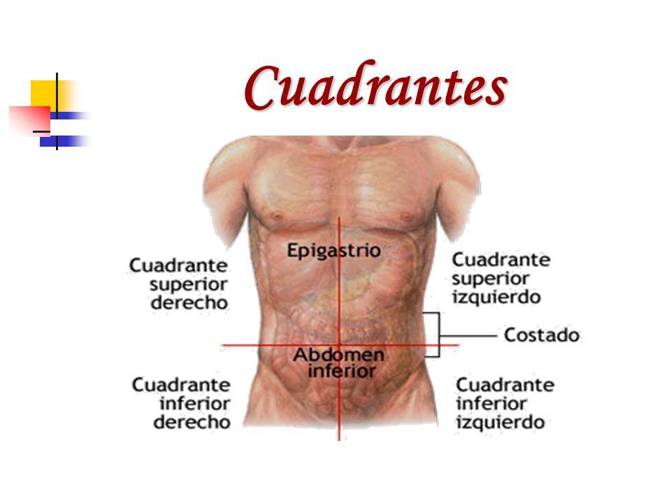 Lujo Derecho Anatomía Cuadrante Superior Imágenes - Imágenes de ...