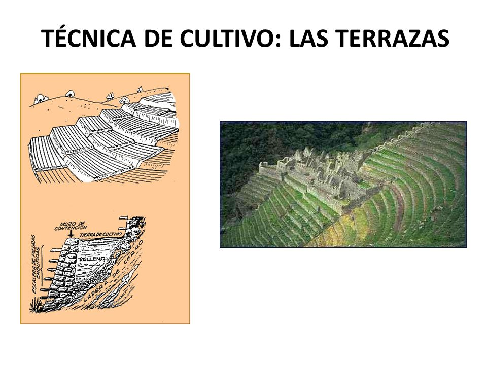 El Imperio Inca Ppt Video Online Descargar