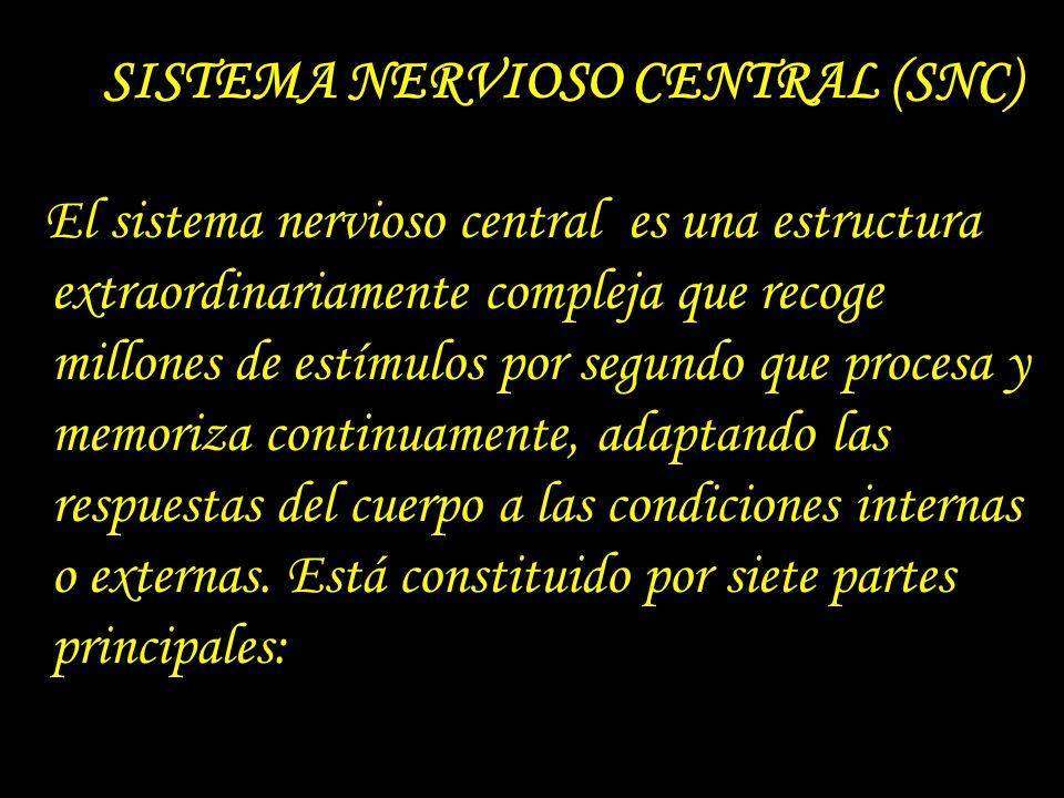 Sistema Nervioso Ppt Descargar