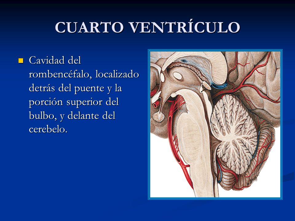 IV VENTRÍCULO MENINGES LÍQUIDO CEFALORRAQUÍDEO - ppt video online ...
