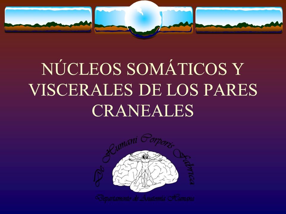 NÚCLEOS SOMÁTICOS Y VISCERALES DE LOS PARES CRANEALES - ppt descargar