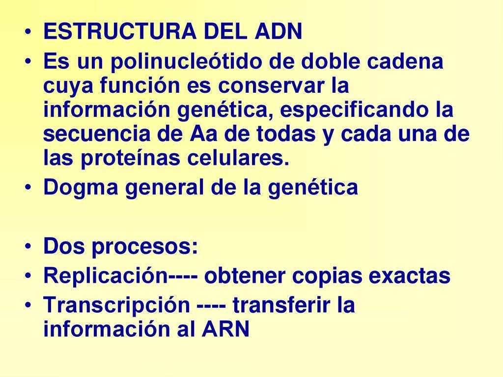 Estructura Del Adn Es Un Polinucleótido De Doble Cadena Cuya