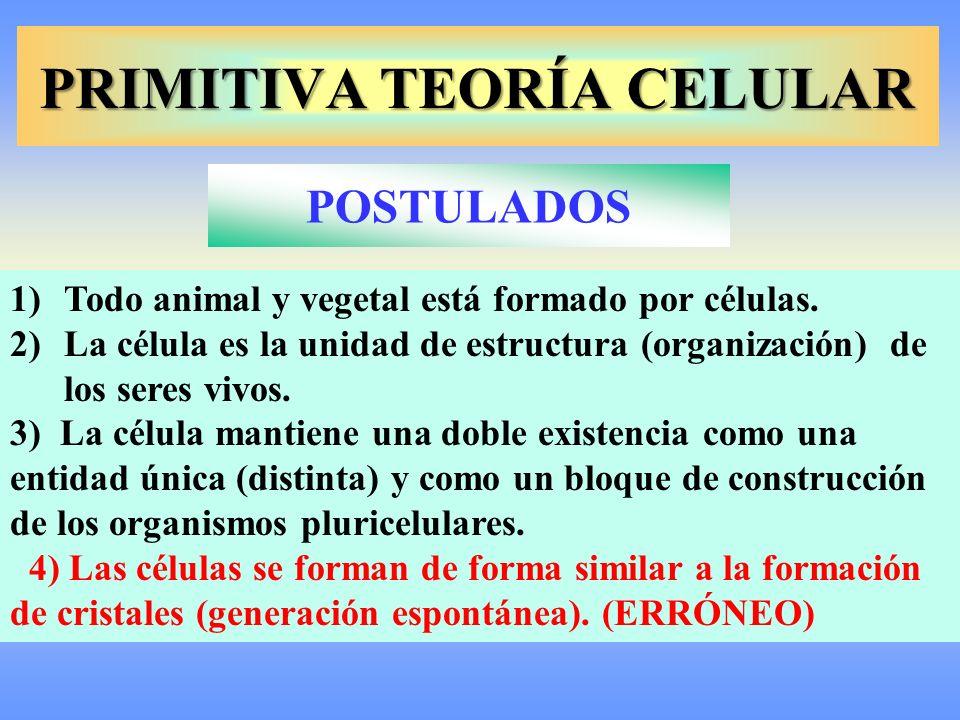 Tema 14 La Célula Unidad De Estructura Y Función Ppt