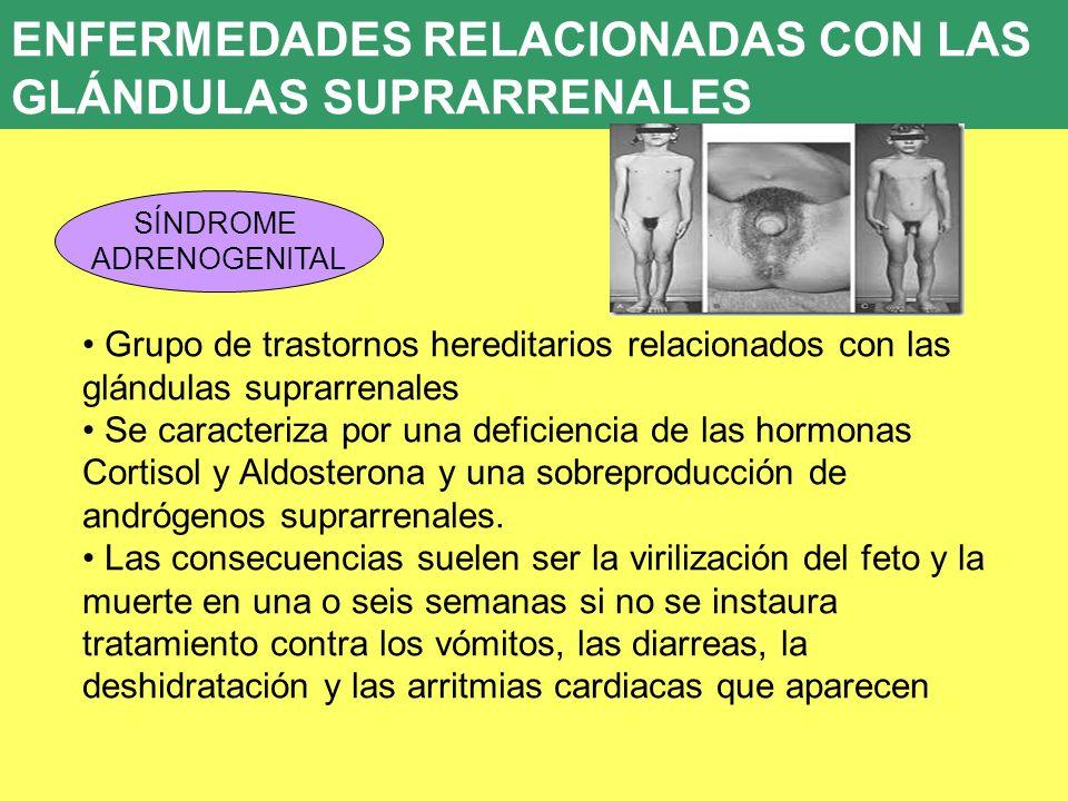Dorable Hormonas Producidas Por Las Glándulas Suprarrenales Molde ...