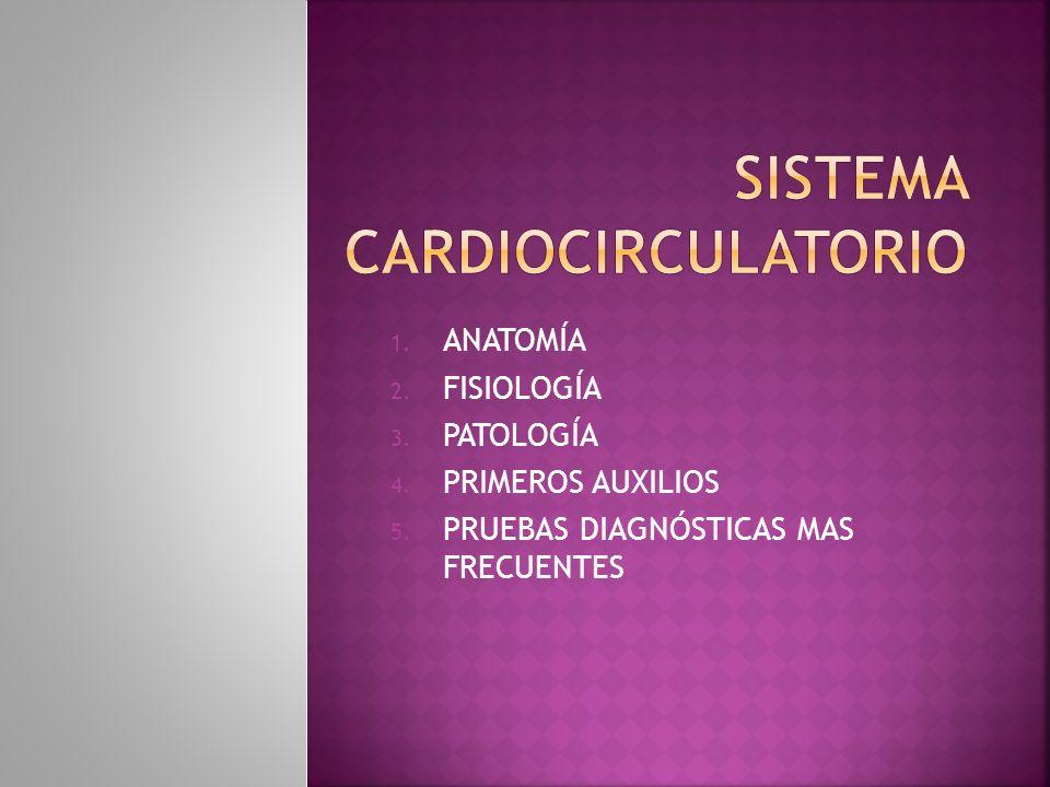 SISTEMA CARDIO CIRCULATORIO - ppt descargar