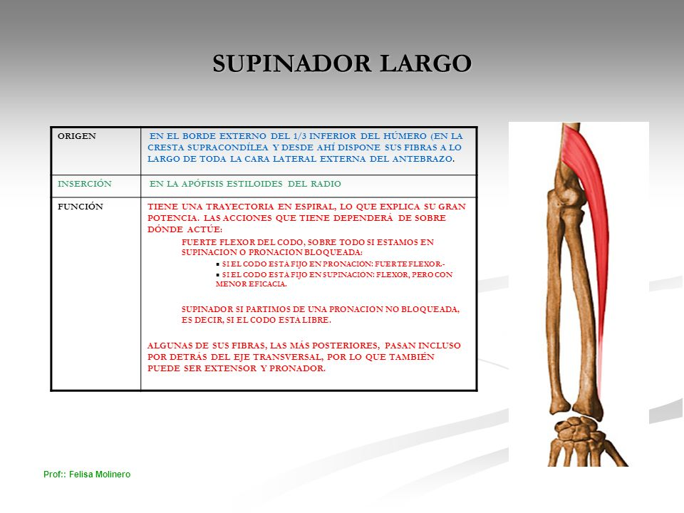 SUPINADOR LARGO ORIGEN
