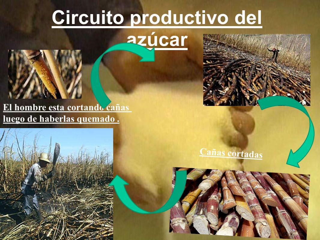 Circuito Productivo De La Caña De Azucar : José fran malena catalina y matías ppt video online descargar
