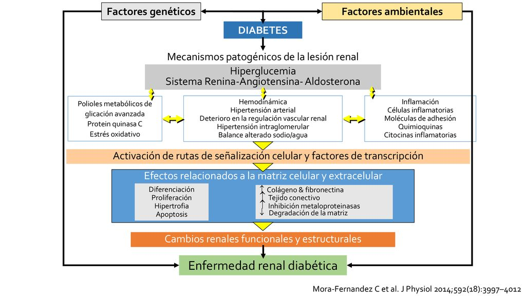 diabetes metaloproteinasas de la matriz