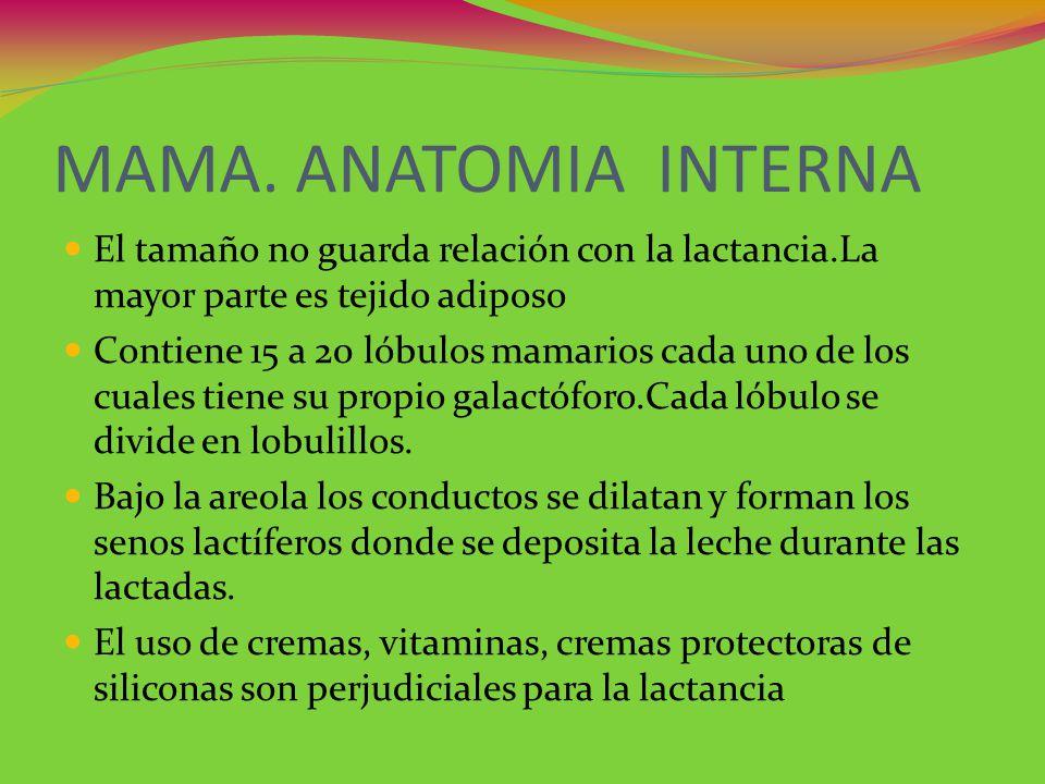 ANATOMIA DE LA MAMA Y OTRAS CONSIDERACIONES - ppt descargar