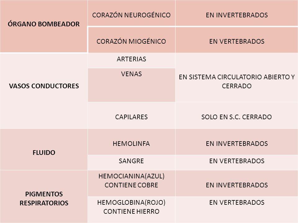 Atractivo Anatomía Comparativa De Los Vertebrados Del Sistema ...
