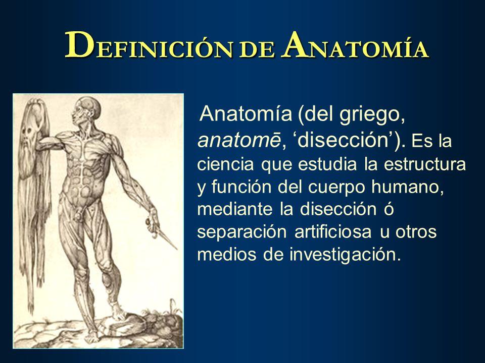 Vistoso La Definición De La Anatomía Embellecimiento - Anatomía de ...