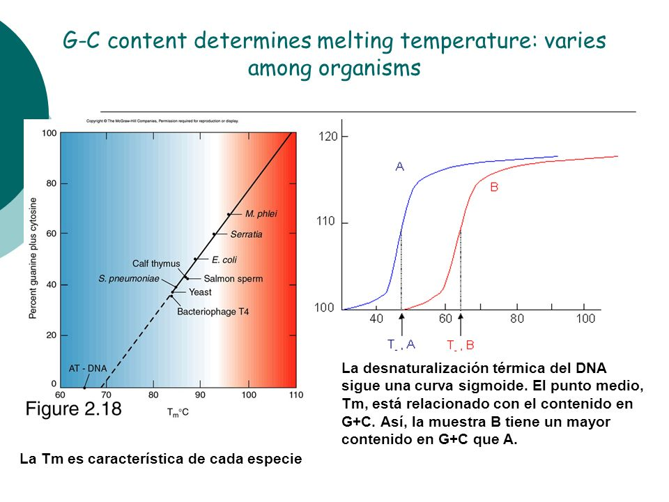 G-C content determines melting temperature: varies among organisms